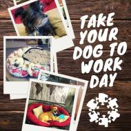 Take Your Dog to Work Day social graphic